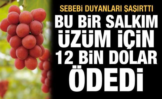 Bir salkım kızıl üzüm için 12 bin 700 dolar ödedi