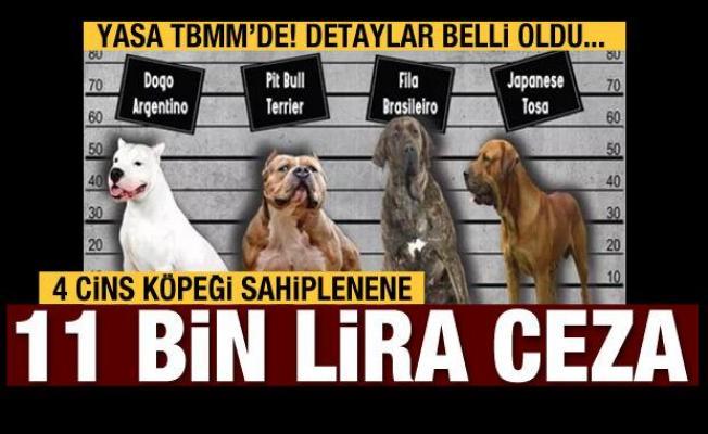 Bu 4 köpek türünü sahiplenenler ceza ödeyecek!