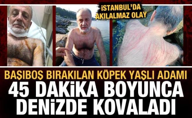İstanbul'da akılalmaz olay: Başıboş köpek, yaşlı adamı denizde 45 dakika kovaladı