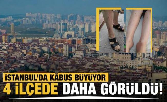 İstanbul'da sivrisinek kâbusu büyüyor! 4 ilçede daha görüldü